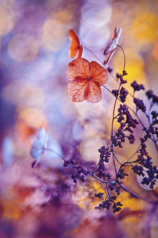 """Zdjęcie Magdaleny Wasiczek zatytułowane """"Baleriny"""" przedstawia kwiaty Hortensji pnącej w scenerii łączącej soczyste, piękne barwy, ale także efektowny efekt bokeh. Fotografia zdobyła prestiżowy tytuł Grand Prox konkursu, ale także została nagrodzona pierwszym miejscem w kategorii """"Piękno roślin"""". Magdalena Wasiczek otrzymała już kilka nagród w poprzednich edycjach konkursu, w tym Grand Prix w 2012 r. W nagrodę autorka otrzyma 5000 funtów."""
