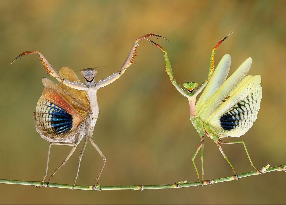 Natura     Więcej ciekawych zdjęć znajdziecie na stronie National Geographic Photo Contest 2014