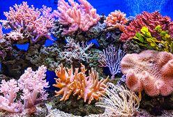 Gdzie znajdują się najpiękniejsze rafy koralowe?