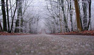 Pogoda na dziś - 20 listopada. Zimno, wilgotno i wietrznie