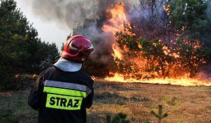 Potężny pożar lasu w Bydgoszczy. Straż ściągnęła wsparcie