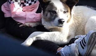 Pies wrócił do właścicieli po 101 dniach. Ostatni raz był widziany w czasie pożarów w Kalifornii