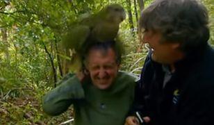 Wymierający gatunek grubych papug wraca do życia. Powinniście je znać z tego filmiku