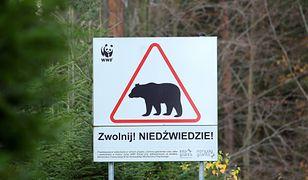 Atak niedźwiedzia w Bieszczadach. Pan Stanisław: ugryzł mnie w ramię