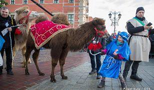 Wystawili w konkursie żywego wielbłąda. Zostali zlinczowani przez internautów