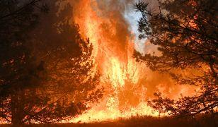 Kampinos. Ogromny pożar pod Warszawą. Płonie 15 hektarów lasu