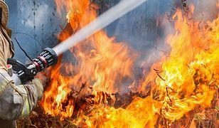 Mazowsze. 120 strażaków walczy z pożarem lasu