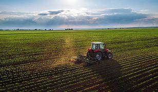 Żywność bez GMO. Senat zdecydował w sprawie specjalnych oznaczeń
