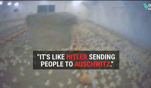 """Angielska gazeta ujawnia film z polskiej fermy drobiu. """"Robimy tu to samo, co Hitler w Auschwitz"""""""