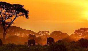 Myślisz o podróży do Kenii? Ta wiadomość ci się spodoba
