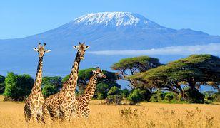 Wakacje w Kenii. To musisz wiedzieć przed podróżą