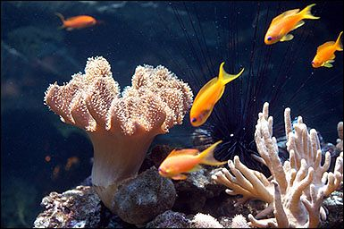 Rafy Koralowe W Akwarium Gdyńskim Morskiego Instytutu Rybackiego W