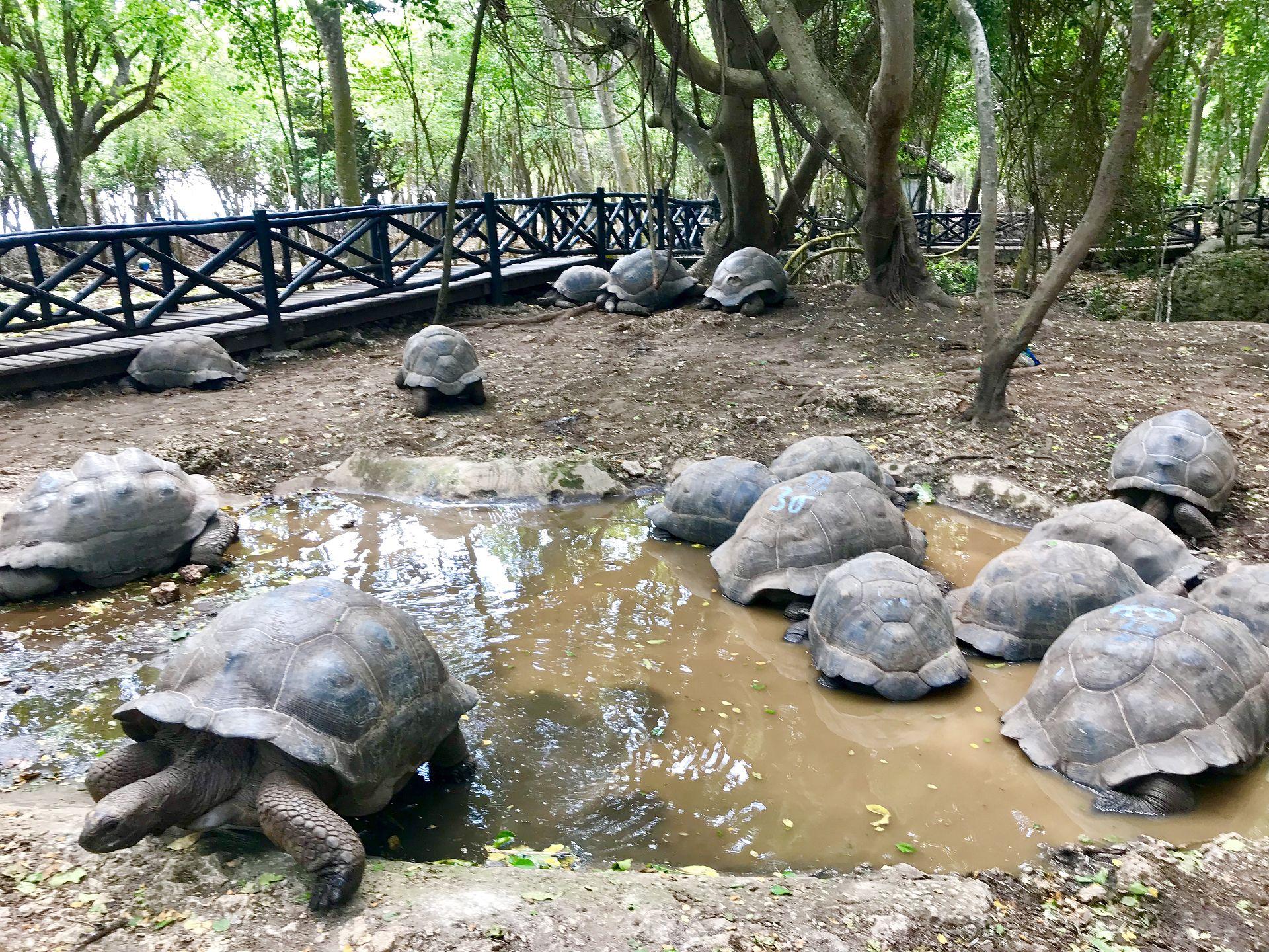 Spotkanie z żółwiami na Zanzibarze