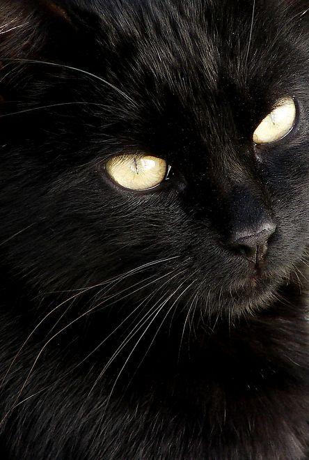 Czarny Kot Przebiegający Drogę I Inne Bdquokocie