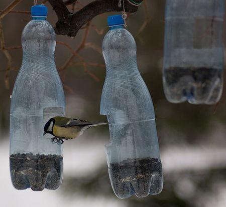 Karmniki Z Butelek Dokarmianie Ptaków Wp Wiadomości