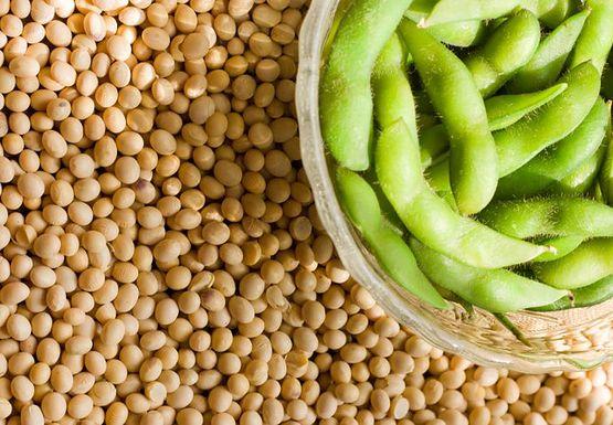 enzym i soja