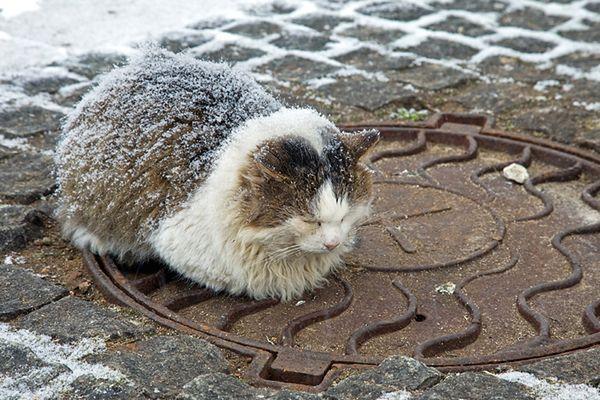 b6b4992e6ead93 Idzie zima! Ratusz namawia do pomagania kotom - WP Wiadomości