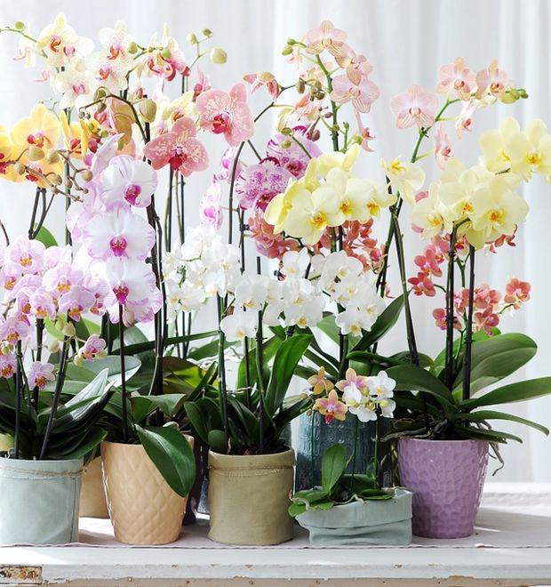 Najmodniejsze Rośliny Doniczkowe Te Kwiaty Długo Nie Wyjdą Z Mody
