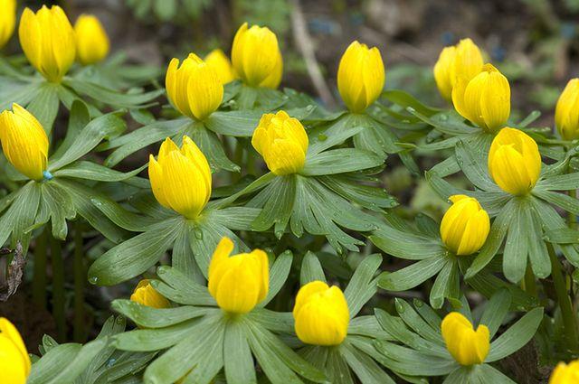 Pierwsze Wiosenne Kwiaty Już Są Wp Dom
