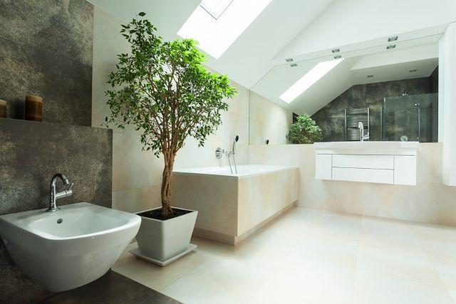 Do łazienki Najlepsze Rośliny Doniczkowe Do łazienki