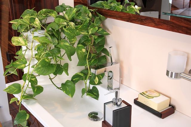Rośliny Cieniolubne W łazience Wp Dom