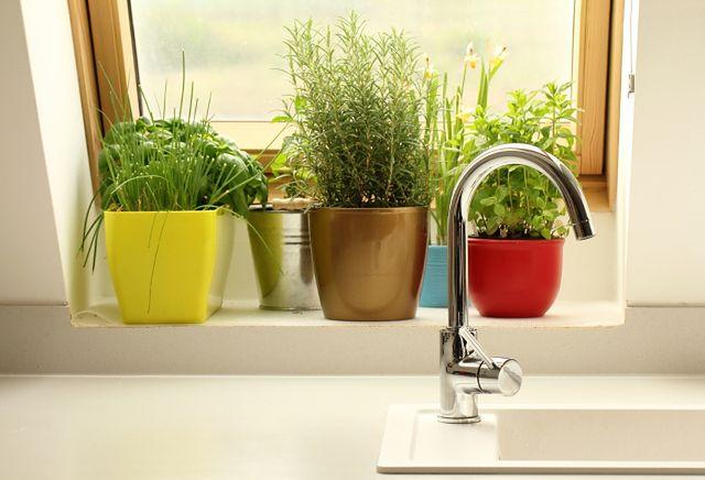 Na Parapet Najlepsze Rośliny Doniczkowe Do łazienki