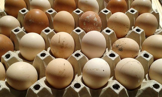 Prawidłowe Przechowywanie Jajek Lodówka To Dobry Pomysł