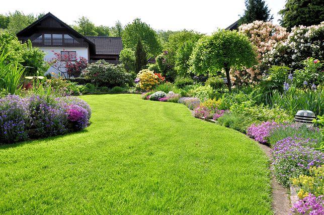 Jak Założyć Trawnik W Ogródku Podstawy Dla Początkującego