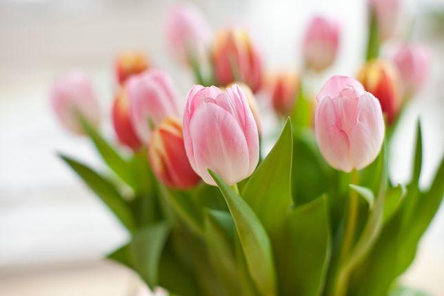 Dzień Matki 2019 Wyjątkowe życzenia Dla Każdej Mamy