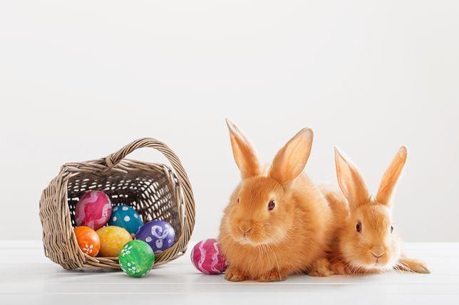 Wielkanoc 2019 Zabawne Oraz Tradycyjne życzenia