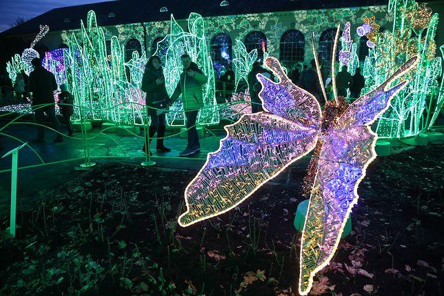 Królewski Ogród światła W Wilanowie Magiczna Atrakcja W