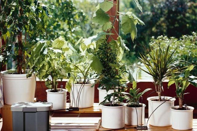 Podlewanie Roślin Podczas Urlopu Co Zrobić By Przetrwały