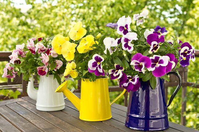 Wiosna Na Tarasie I Balkonie Jakie Rośliny Sadzić I Jak Je