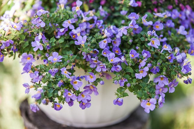 Balkon W Kolorach Natury Jakie Kwiaty Wybrać Wp Dom