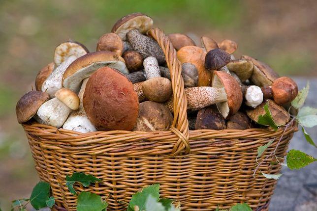 Jakie grzyby warto zbierać w Polsce
