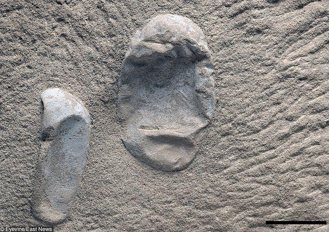 Formy datowania skamielin