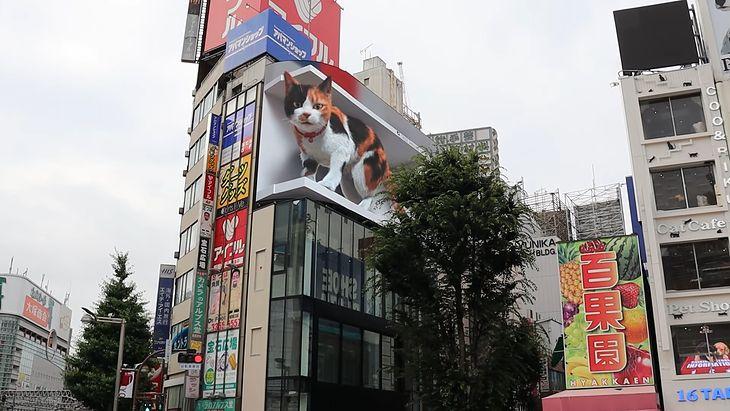 Gigantyczny kot w Tokio