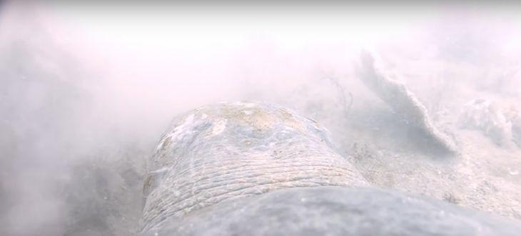 Wyjątkowe nagranie z Australii. Żółw nie dał się zjeść rekinowi