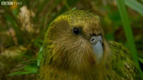 Jak fotograf może zostać pobity przez dziwką papugę