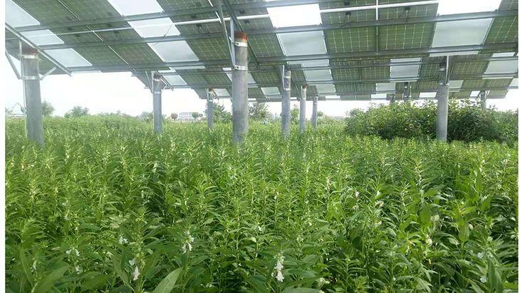 Agrofotowoltaika, fotowoltaika dla rolników