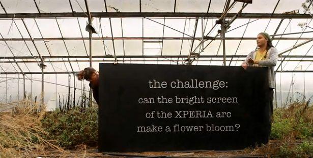 Ekran Xperii arc tak jasny, że aż kwiaty rosną?